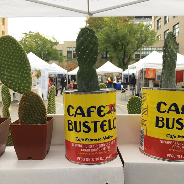 SoWa Market today! We have a few cacti left for the season!