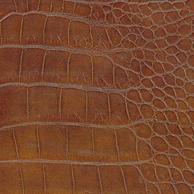 10-dwarf_crocodiles-400x400.jpg