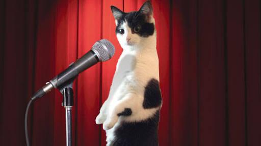 cat-comedy