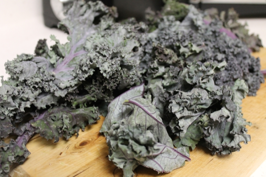 Freshly picked purple kale, so much tastier when grown with some TLC