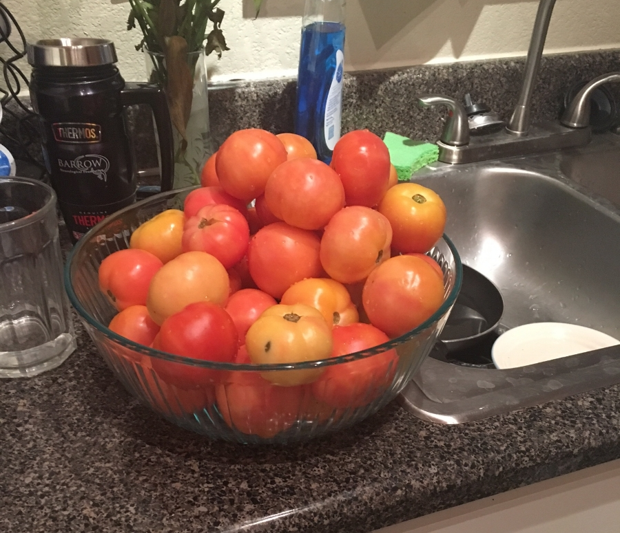 This was only about a quarter of the tomatoes we brought home, we really got a good haul out of that our trek to the church
