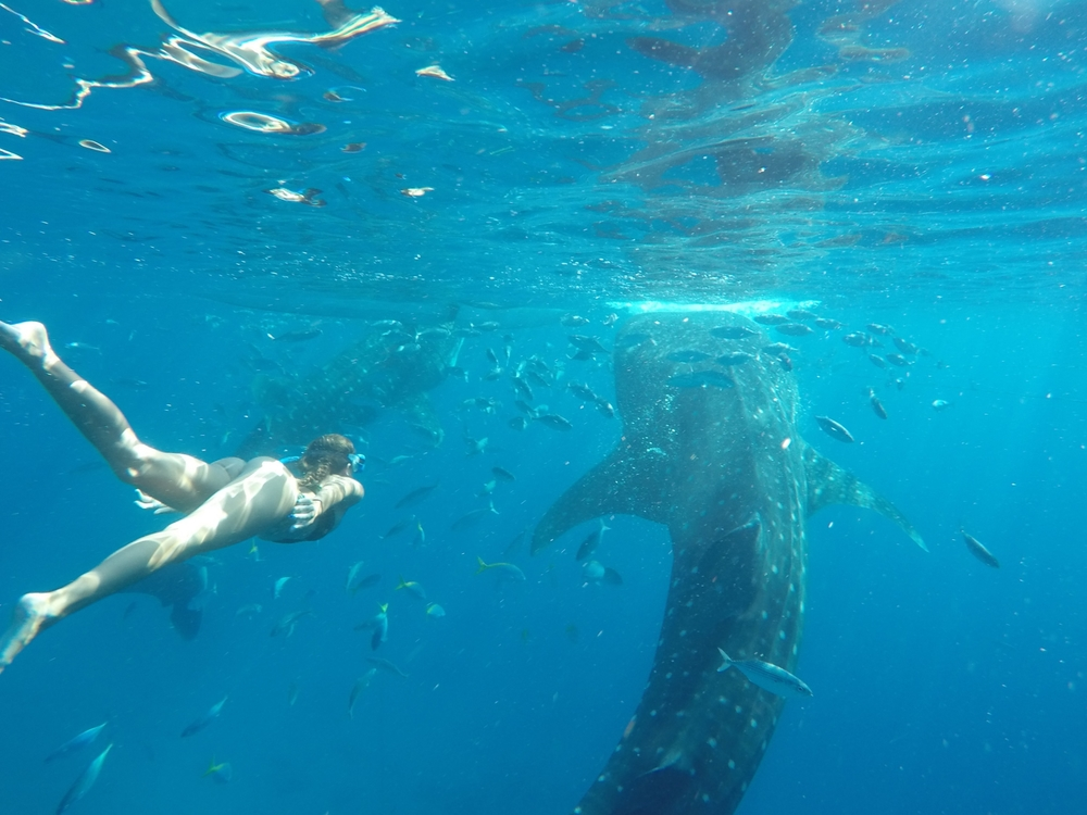 Alyssa Nicole swimming with whale sharks in the Philippines