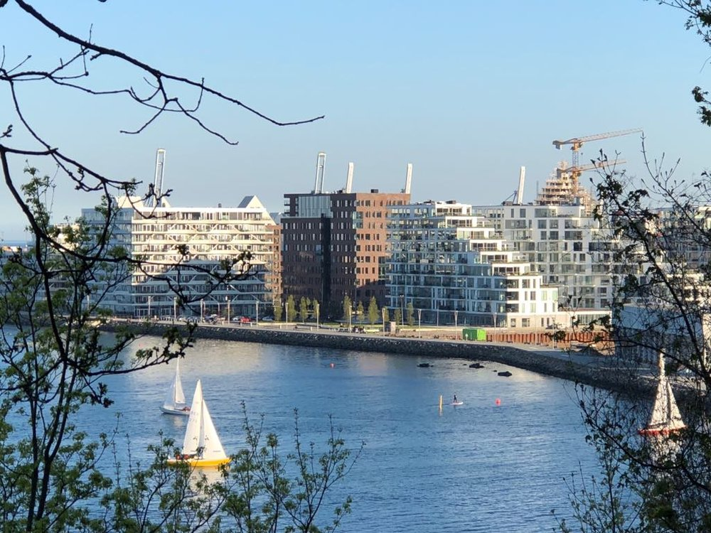 The view of the harbour from Risskov forest