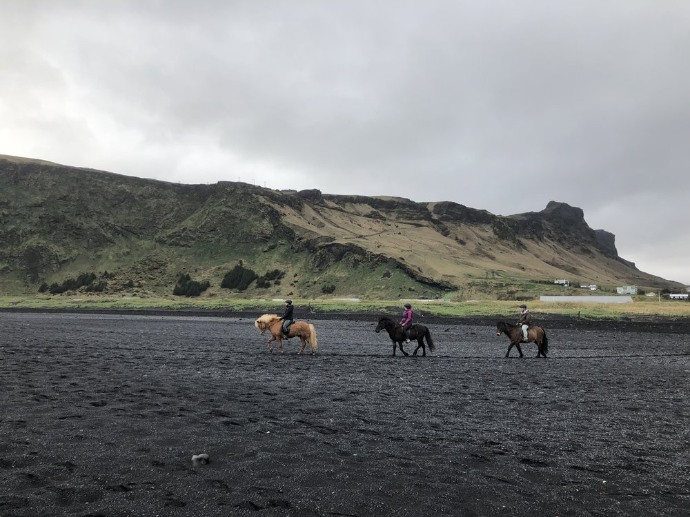 The majestic horses of Iceland