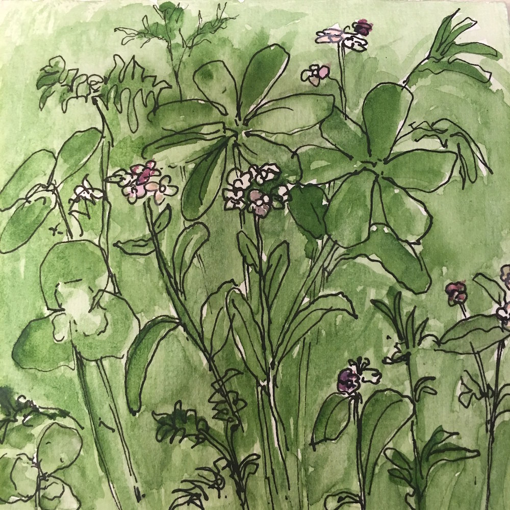 WILDFLOWER SKETCH