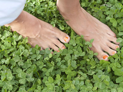 CLOVER GROUNDCOVER LAWN