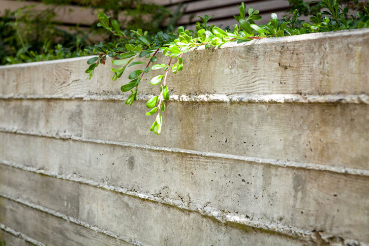 BOARD FORMED CONCRETE GARDEN WALL