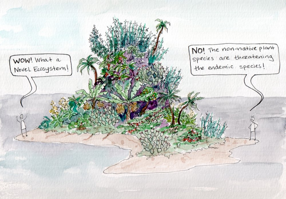 "Ascension Island in the tropical South Atlantic is a manufactured ecosystem: an entire cloud forest worth of vegetation and fauna has been introduced by seafarers and by colonists over the last few hundred years. Despite the species having widely varying origins, they function as working ecosystem.   Many ecologists look at this in horror, noting native fern species that struggle to compete in a radically new ecosystem, and citing Ascension Island as an example of how native ecosystems can be destroyed through irresponsible introduction of new species.  Other ecologists look at this and see it as proof that ecosystems are spontaneous, random assemblages of species that change with time and circumstance. The success of the cloud forest on Ascension Island suggests that nature will continue to plod on with or without us, and despite our best efforts to try to conserve the ecosystems of the past.  Needless to say, this is a deeply controversial topic. The idea of accepting ""novel ecosystems"" along with invasive species and loss or modification of familiar ecosystems is both frightening and emotionally charged. To explore this topic more, I highly recommend  The New Wild  by Fred Pearce, which makes a case for novel ecosystems and invasive species. You don't have to agree with him; but I'd be surprised if you don't come away from the read without some new things to think about."
