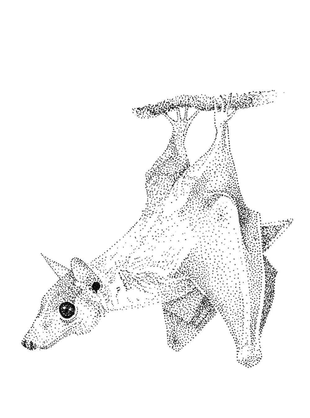 bat-hanging-curious.png