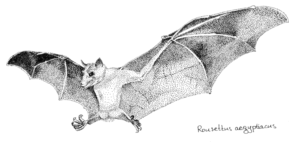 bat-spreadwings.png
