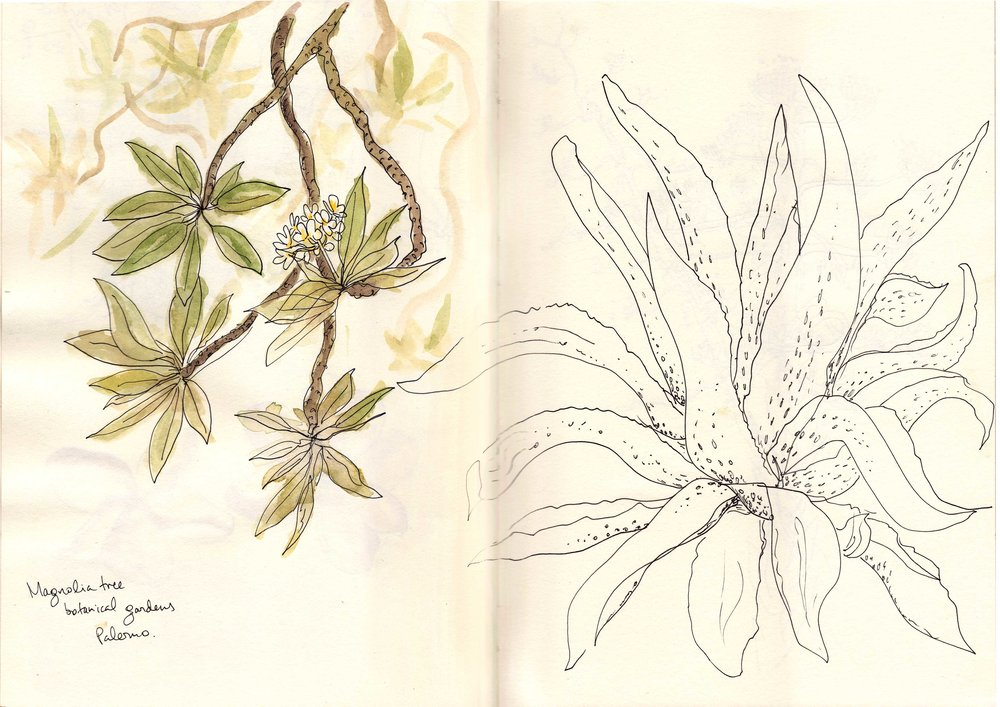 agave-magnolia-spread.jpg