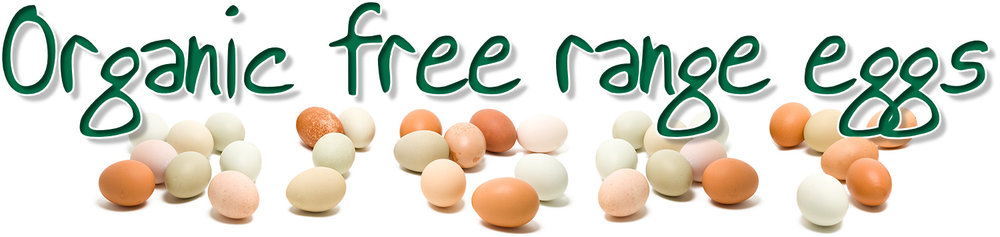 Organic-Free-Range-Eggs.jpg