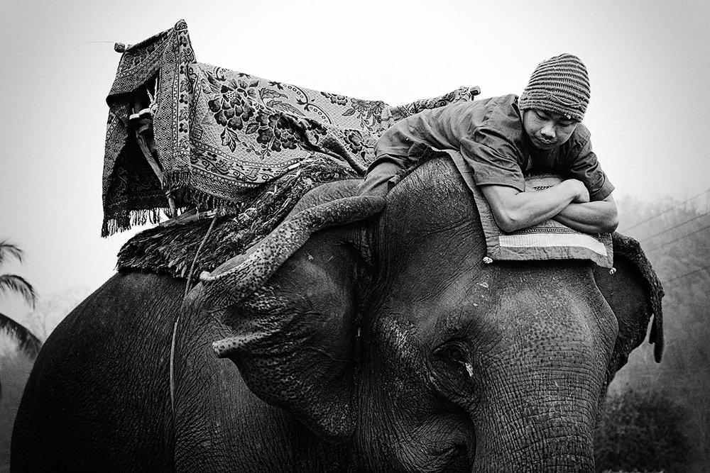 Elephant Festival Pak Lai