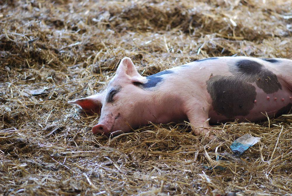 Caherbeg Free Range Pig Farm