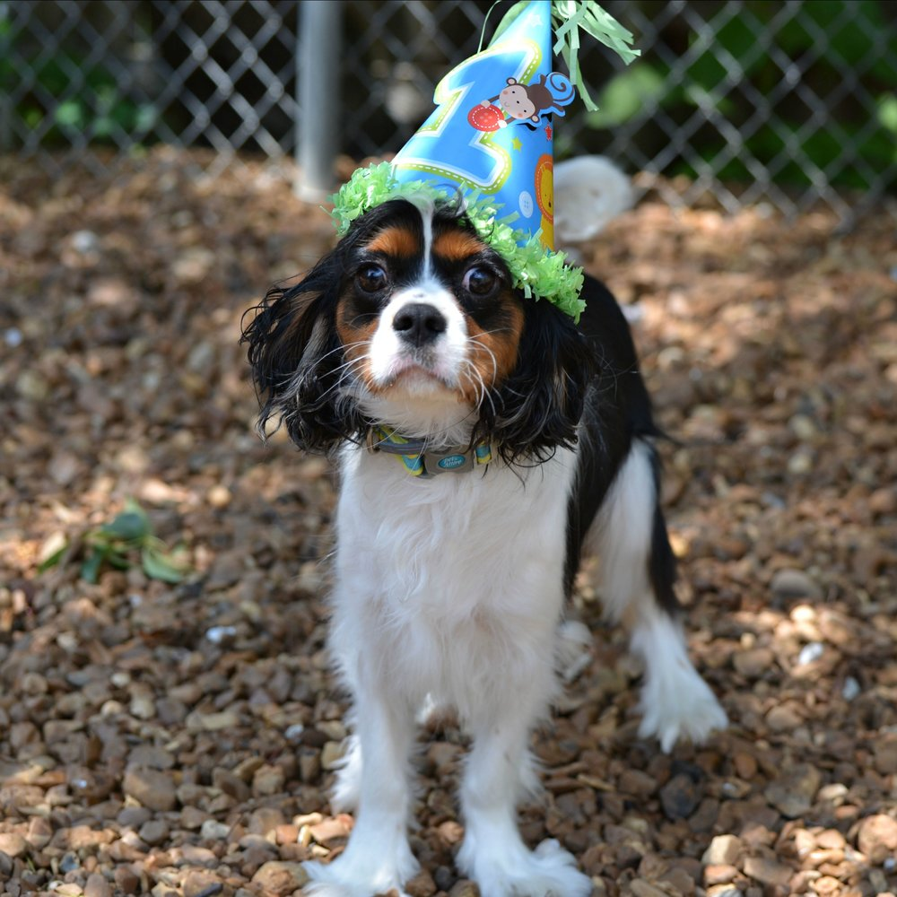 Mace, 1st Birthday, July 2016