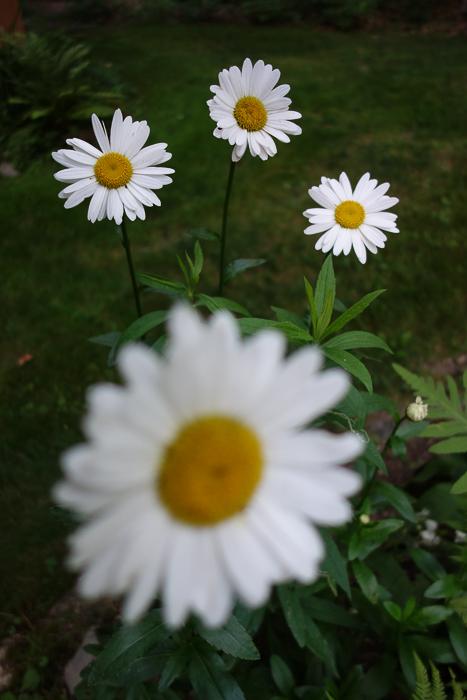 TI floral bouquet-10.jpg