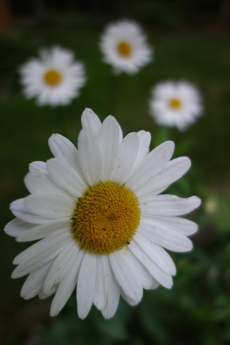 TI floral bouquet-8.jpg