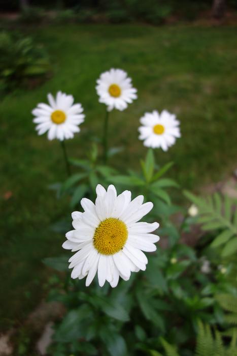 TI floral bouquet-9.jpg