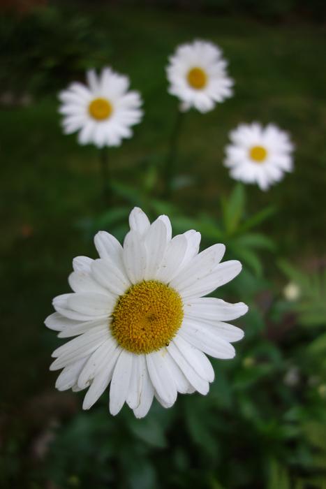 TI floral bouquet-7.jpg
