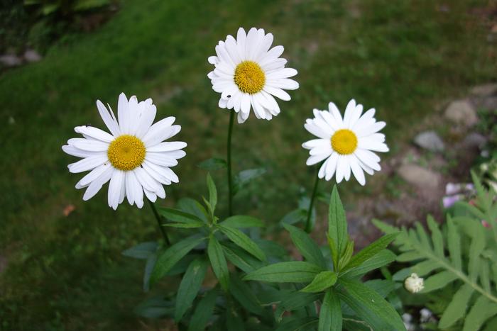 TI floral bouquet-6.jpg