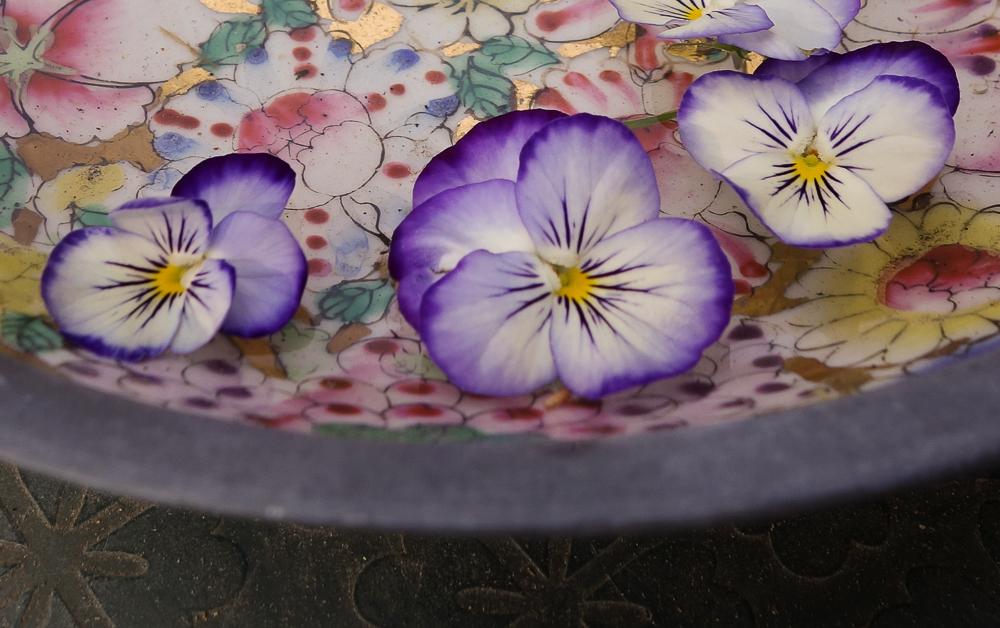 TI - Petals and Blooms-1.jpg