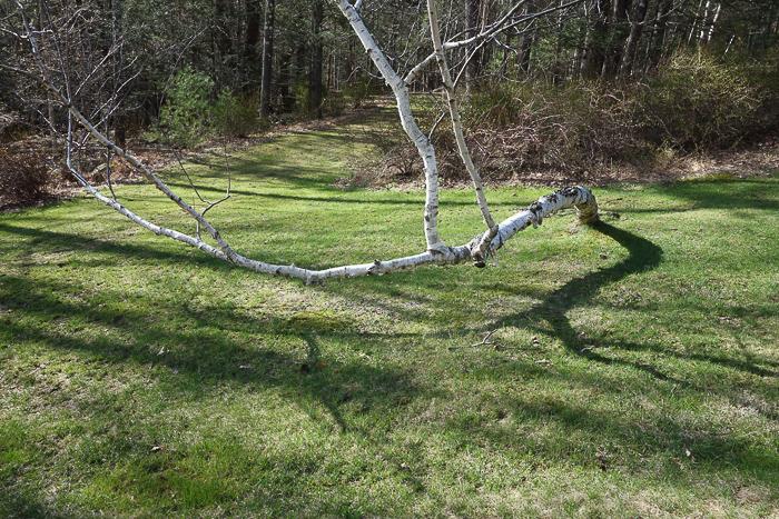 TI - Random Trees and Views-6.jpg