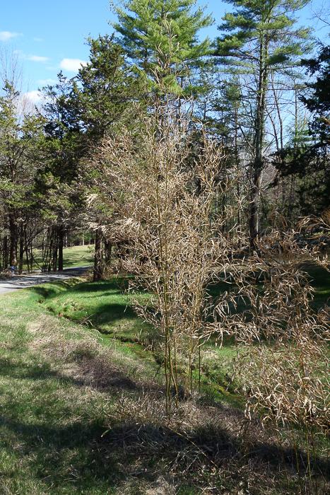TI - Random Trees and Views-4.jpg