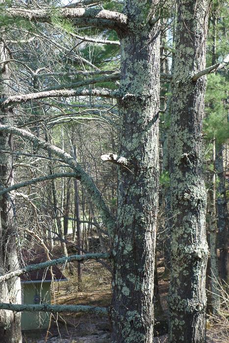 TI - Random Trees and Views-5.jpg