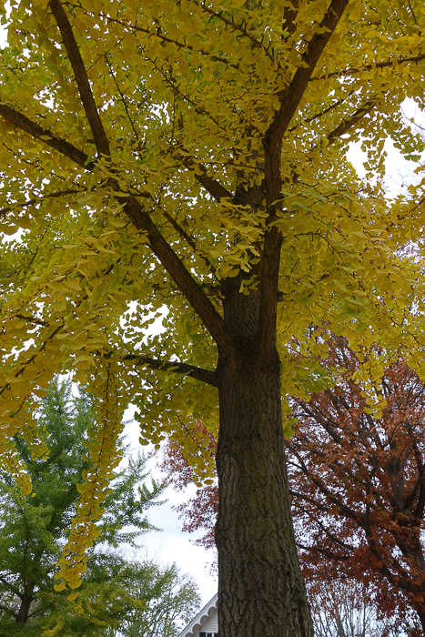 TI - Random Trees and Views-3.jpg