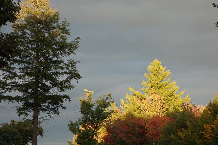 TI - Random Trees and Views-2.jpg