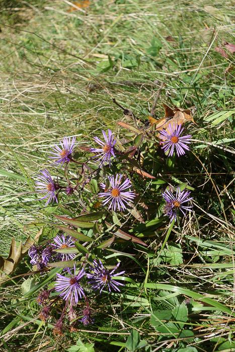 IaA - White Lily Pond-12.jpg