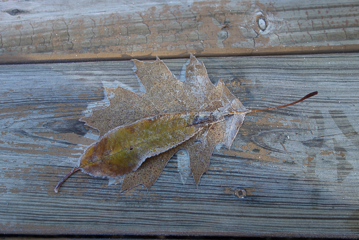 In and Around - First Heavy Frost-21.jpg