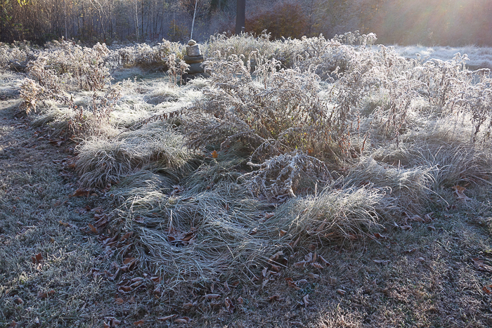 In and Around - First Heavy Frost-16.jpg
