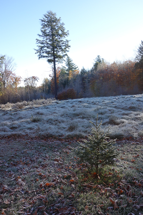 In and Around - First Heavy Frost-17.jpg