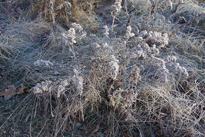 In and Around - First Heavy Frost-13.jpg