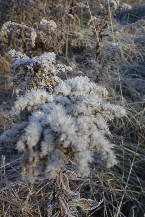In and Around - First Heavy Frost-14.jpg