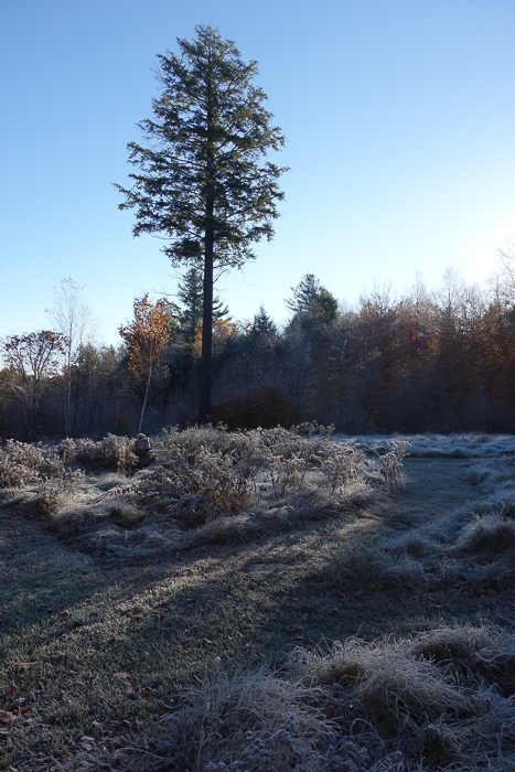 In and Around - First Heavy Frost-12.jpg