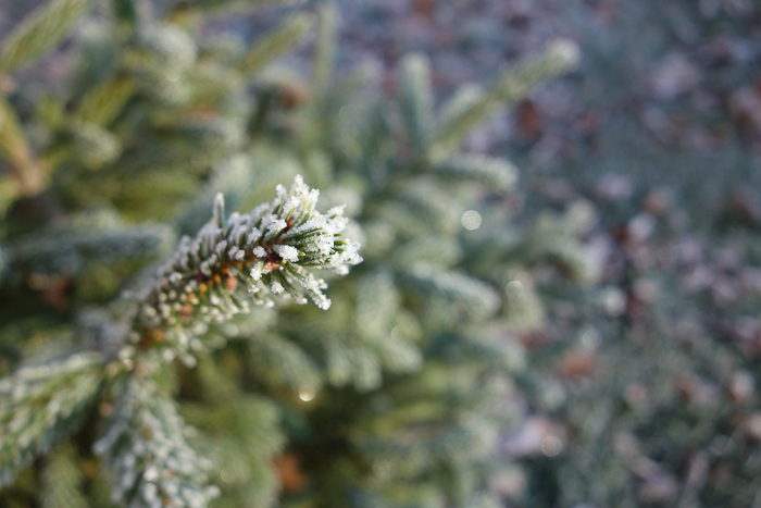 In and Around - First Heavy Frost-11.jpg