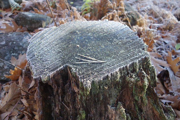 In and Around - First Heavy Frost-7.jpg