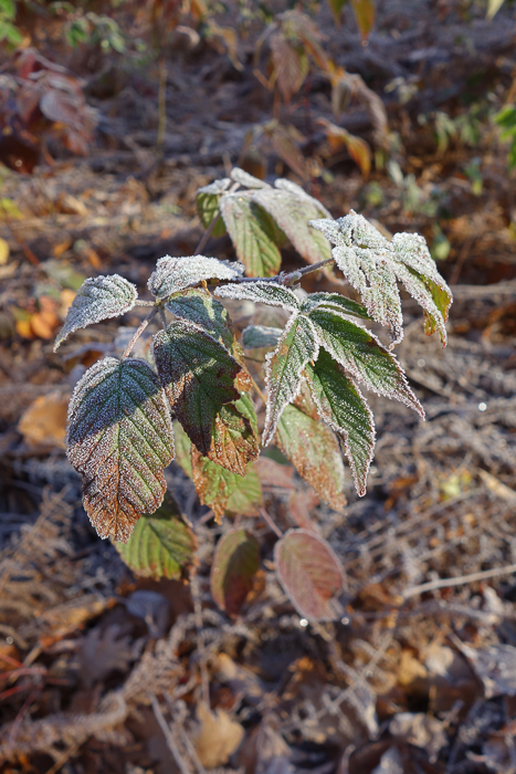 In and Around - First Heavy Frost-6.jpg