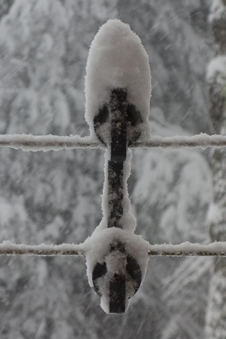 a lot of snow-2.jpg