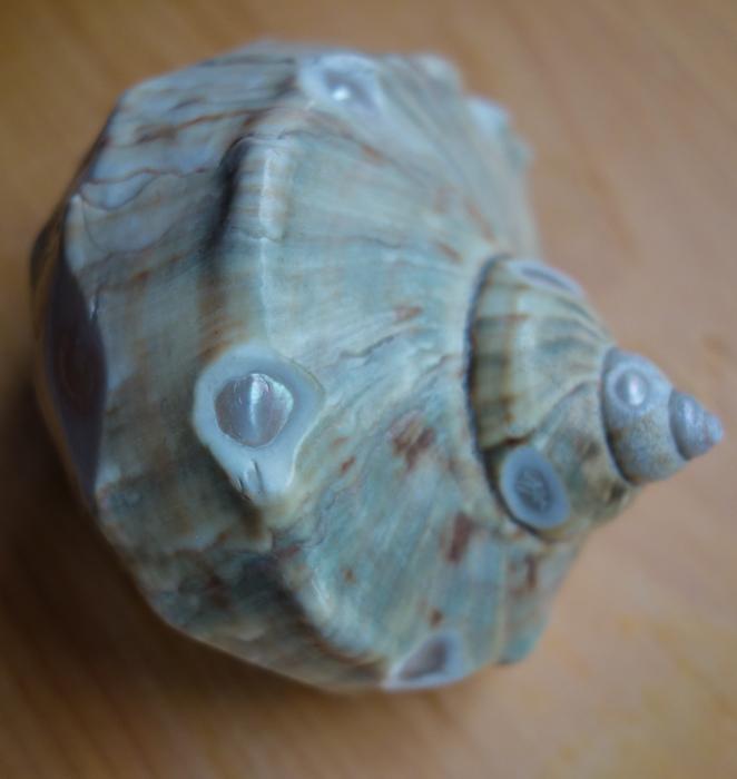 IaA-Antique Shells-25.jpg