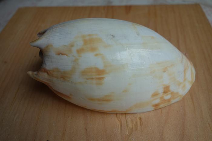 IaA-Antique Shells-16.jpg