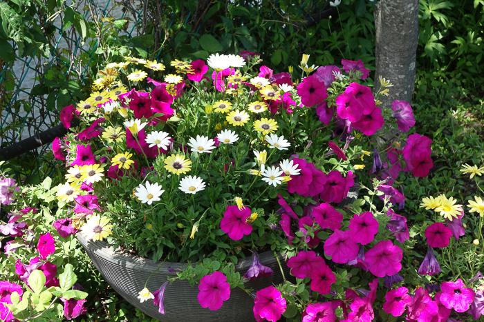 Bridge of Flowers-6.jpg