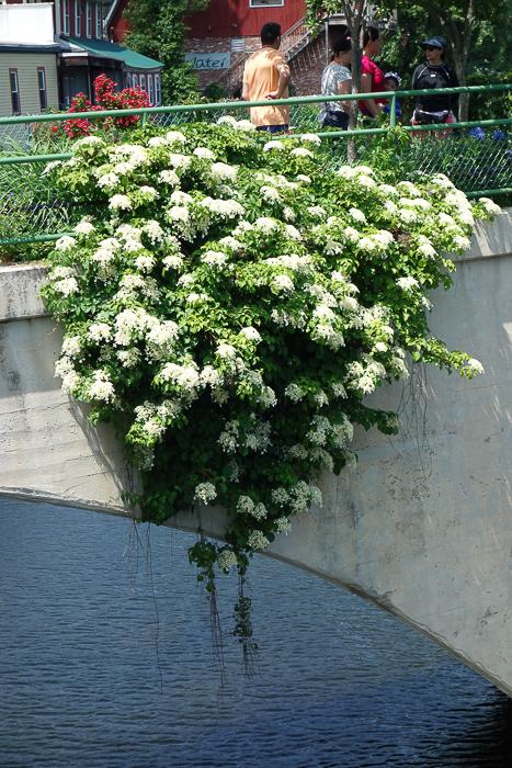 Bridge of Flowers-2.jpg