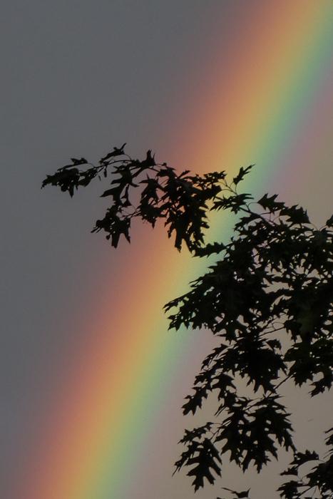 June Rainbow-10.jpg