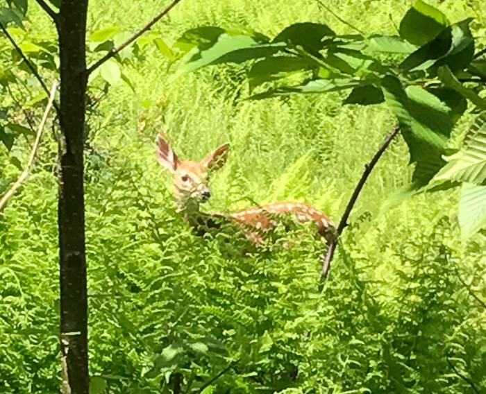 Deer kids and teen-9.jpg