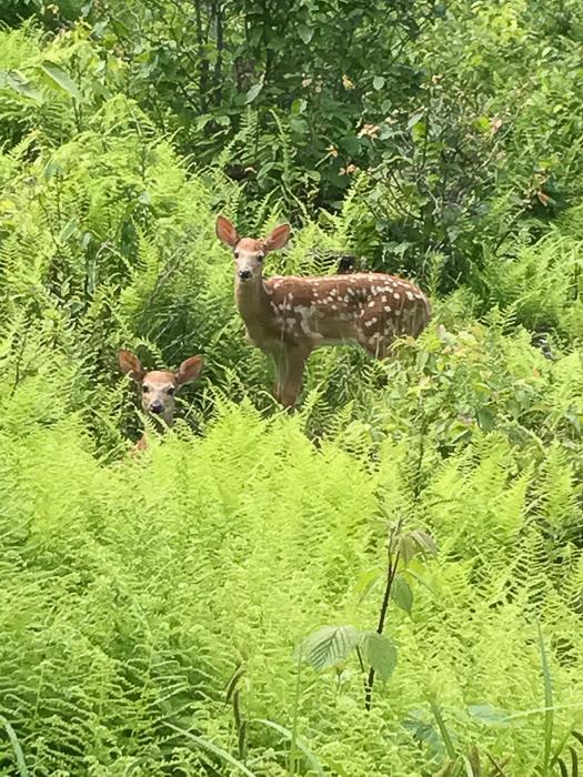 Deer kids and teen-10.jpg