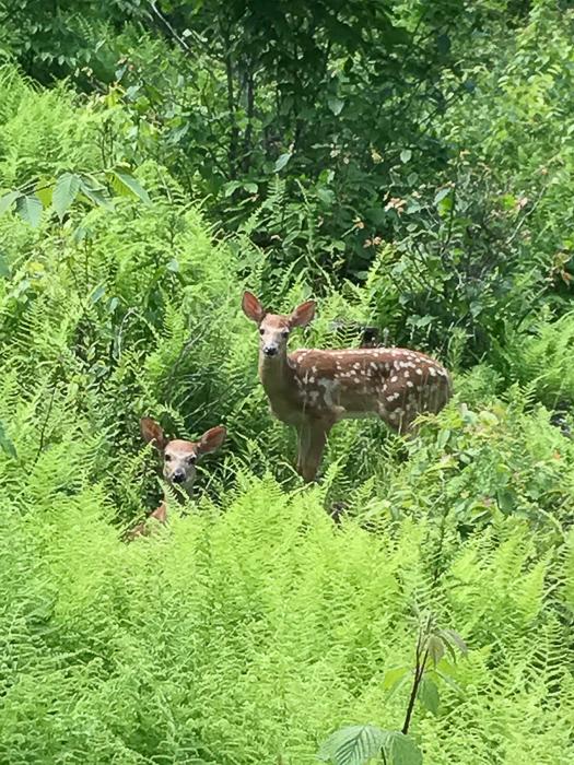 Deer kids and teen-11.jpg