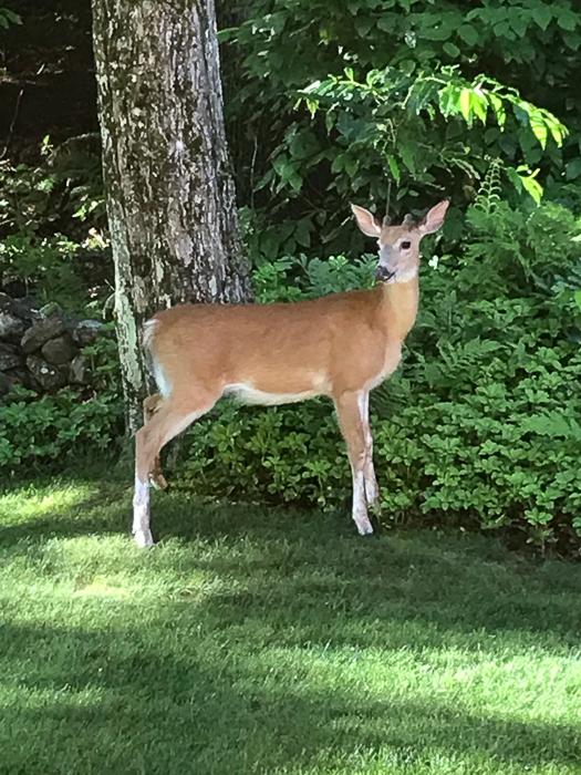 Deer kids and teen-7.jpg